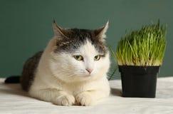 La photo haute étroite de chat avec l'herbe verte pousse Photos libres de droits