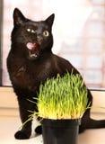 La photo haute étroite de chat avec l'herbe verte pousse Image stock