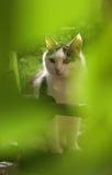 La photo haute étroite de chat dans le jardin vert pousse des feuilles image stock