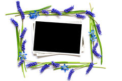 La photo vide dans un cadre de bleu de ressort fleurit Images libres de droits
