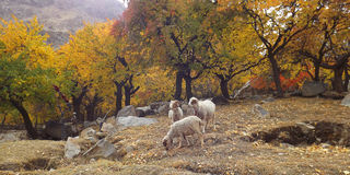 La photographie a été prise la vallée de Barah sur le chemin au khaplu, Baltistan, Photos stock