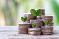 La pièce en argent de la forme de graphique et l'arbre vert complètent développé dans le concep Photo stock