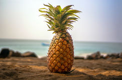La piña está mintiendo en la arena debajo de la sombra de palmeras en la playa Imágenes de archivo libres de regalías