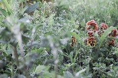 la pianta appartiene alla famiglia viola Immagini Stock