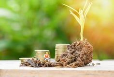 La pianta che cresce sul suolo e che coltiva il suolo di scavatura di giardinaggio con la moneta di oro aumenta la crescita fotografia stock libera da diritti