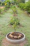 La pianta concreta del tubo immagine stock