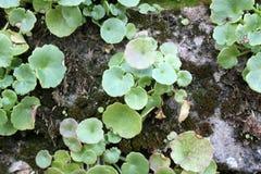 La pianta cresce sulla pietra con muschio Immagine Stock Libera da Diritti