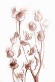 La pianta del cardo selvatico sul fondo di bianco di lerciume Fotografia Stock Libera da Diritti