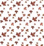 La pianta dell'acero lascia pattern-02 Immagini Stock Libere da Diritti