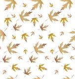 La pianta dell'acero lascia pattern-01 Fotografia Stock