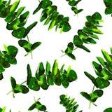 La pianta dell'eucalyptus lascia il modello senza cuciture Fotografie Stock Libere da Diritti