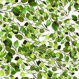 La pianta dell'eucalyptus lascia il modello senza cuciture Fotografia Stock