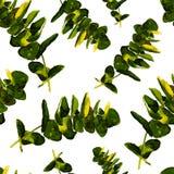 La pianta dell'eucalyptus lascia il modello senza cuciture Immagini Stock Libere da Diritti