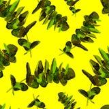 La pianta dell'eucalyptus lascia il modello senza cuciture Immagine Stock