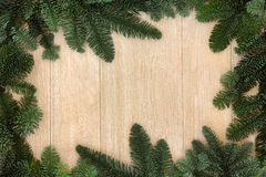 La pianta dell'inverno confina Fotografie Stock