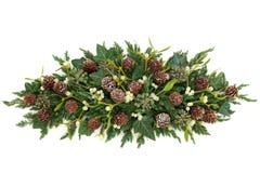 La pianta dell'inverno visualizza Fotografia Stock Libera da Diritti
