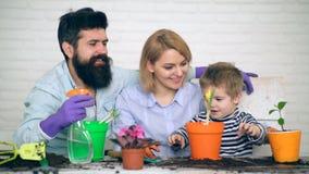 La pianta della famiglia fiorisce insieme e canta le canzoni circa la pioggia Il ragazzo aiuta le piante della pianta dei genitor stock footage