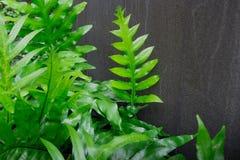 La pianta della giungla e le piante pericolose devono essere tenute ad una distanza di sicurezza e la pianta tossica della giungl Fotografie Stock