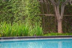 La pianta della giungla ha piantato vicino la piscina vi dà una sensibilità all'aperto verde piacevole mentre viaggiava o alla vo Fotografie Stock Libere da Diritti