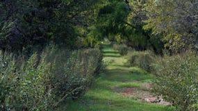 La pianta della molla che fa un'escursione percorso fotografia stock libera da diritti