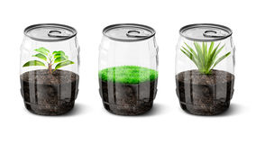 La pianta dentro può Immagine Stock
