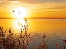 La pianta di detra di tramonto Fotografie Stock