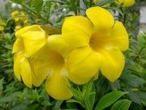 La pianta di fioritura su verde copre di foglie fondo Fotografia Stock Libera da Diritti