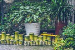 La pianta di xanadu con la decorazione di bambù del vaso nella pioggia immagine stock