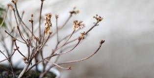 La pianta fiorisce una, l'altra met? ? morto fotografie stock libere da diritti
