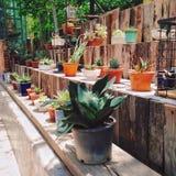 La pianta lascia il coffeeshop verde Fotografia Stock Libera da Diritti