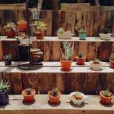 La pianta lascia il verde Fotografia Stock Libera da Diritti