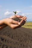 La pianta in mani Immagini Stock Libere da Diritti
