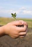 La pianta in mani Fotografia Stock