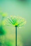 La pianta misteriosa Fotografie Stock Libere da Diritti