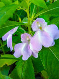 La pianta in natura Fotografia Stock Libera da Diritti