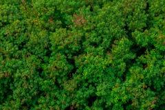 La pianta pacifica della giungla che simbolizza un fresco respira di aria e Fotografia Stock Libera da Diritti