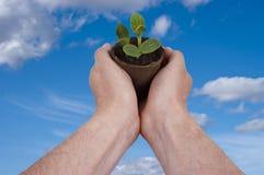 La pianta, piantante, giardino, facente il giardinaggio si sviluppa crescente Fotografia Stock
