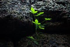La pianta si sviluppa Immagini Stock Libere da Diritti