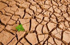 La pianta si sviluppa alla terra del drough Fotografie Stock