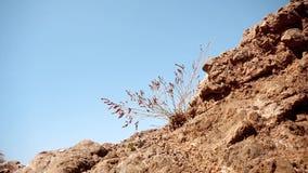 La pianta si sviluppa attraverso le rocce video d archivio