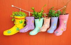 La pianta si sviluppa negli stivali Fotografia Stock