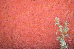 La pianta spinosa si sviluppa su una parete rossa fotografia stock