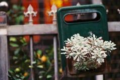 La pianta sta crescendo dalla cassetta delle lettere Fotografia Stock Libera da Diritti