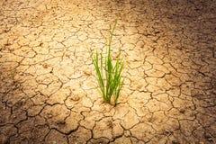 La pianta su suolo incrinato e si asciuga nel periodo di siccità Fotografie Stock Libere da Diritti