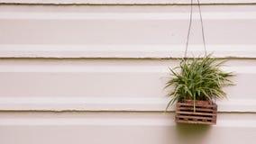 La pianta su una parete Fotografie Stock Libere da Diritti