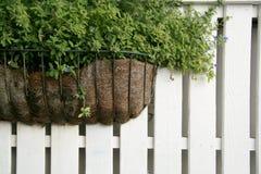 La pianta sulla rete fissa di legno bianca Fotografia Stock