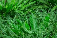 La pianta tropicale della giungla con varie piante assortite in questa ha abbellito il cortile posteriore Questa foto con tutte l Fotografie Stock Libere da Diritti