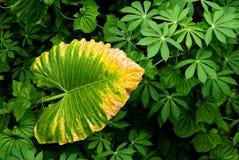 La pianta tropicale lascia l'estratto Fotografie Stock Libere da Diritti