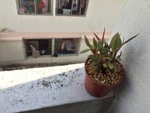 La pianta in vaso si nasconde nell'ombra Fotografia Stock