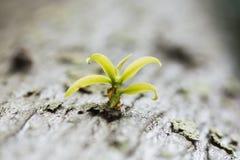 La pianta verde è fiorito sull'albero Immagini Stock